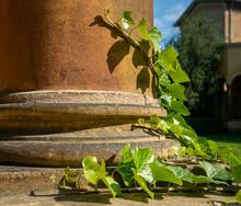 Rankepflanze
