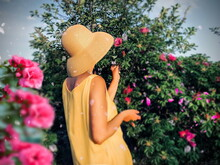 A Woman In A Yellow Dress And A Straw Hat Enjoys The Scent Of Wild Rose Flowers On A Blooming Green Bush With Red And Pink Buds A Scene From Summer Life In Nature