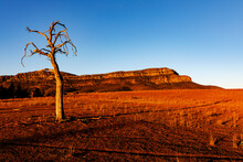 Dead Tree In Front Of Ranges In Afternoon Light