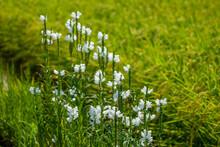 石川県白山市の田んぼの中に自然や動物がある風景 Landscape With Nature And Animals In Rice Fields In Hakusan City, Ishikawa Prefecture.