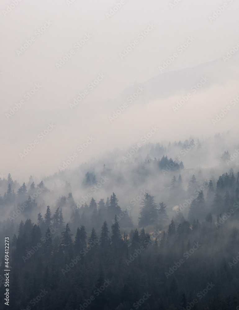 Trees on the side of a mountain in a valley covered by smoke from Forest Wildfire. Nature Disaster. Lytton, British Columbia, Canada.
