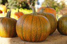 Orange And Green Pumpkins Sitting On Burlap.