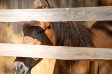Portrait Of A Beautiful Light Brown Horse Behind A Paddock Fence.
