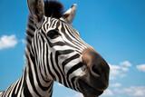 Fototapeta Fototapeta z zebrą - selective focus. Nose, muzzle, close .Cape mountain zebra close-up against the sky. Equus zebra in natural habitat. National reserve of zebras Askania Nova. Zebra portrait cheerful. space for text.