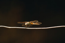 Closeup Of A Dragonfly On A Wire In A Field Under The Sunlight With A Blurry Background