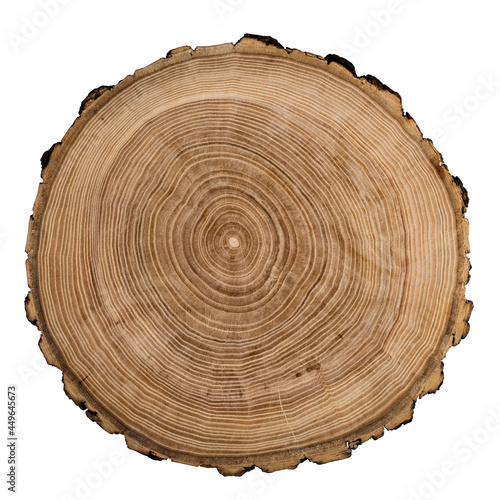 Fotografie, Obraz Cut, slice, section of tree wood isolated on a white background