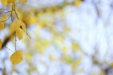 Abstract Autumn Fall Background Leaves Yellow Nature October Wallpaper Seasonal
