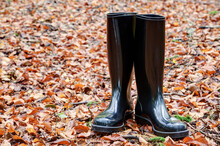 In The Autumn Black Rubber Boots Stand On The Forest Floor Which Is Covered With The Fallen Red Leaves Of The Trees..