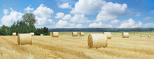 Rolled Hay Bales In A Field After Harvest