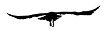 Black Silhouette Birds Isolated On White Background. Falcon, Hawk, Eagle Or Orel. A Large Predator Soar In The Air. Graphic Simple Element For Design. Vector Illustration.