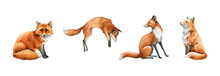 Fox Animal Set. Watercolor Illustration. Wild Cute Red Fox Collection. Wildlife Furry Animal With Red Fur And Black Paws Sitting, Hunting. Isolated On White Background. Adorable Foxy Element