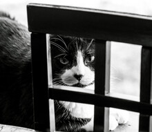 Grayscale Shot Of An Adorable Black Cat Lying Behind A Wooden Fence With A Blurry Background