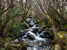 Australia, New South Wales, Creek Flowing Among Rocks In Forest At Merritt's Nature Track In Kosciuszko National Park