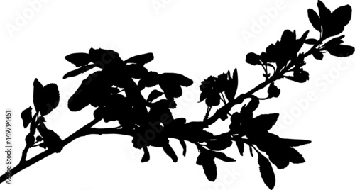 Obraz na plátně plum tree blossoming branch isolated black silhouette