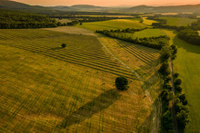 Fields Of Freshly Cut Grass Prepared For Hay Production. Aerial View Of A Cultivated Farmland In Slovakia.