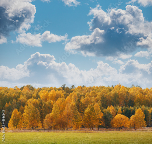Autumn landscape yellow trees in fall forest under beautiful blue sky with white fluffy clouds
