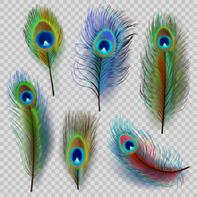 Exotic Feathers. Beautiful Realistic Peacock Colored Birds Decent Vector Feathers Illustrations