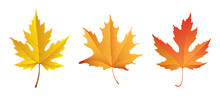 Fall Maple Leaves Isolated On A White Background. Vector Illustration.