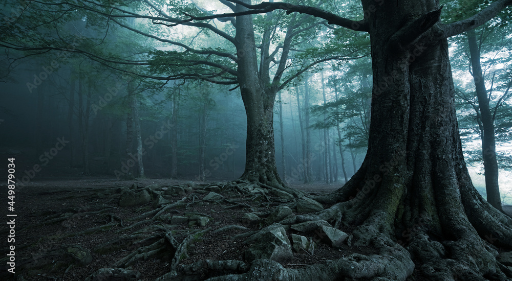 forest in darkness with fog