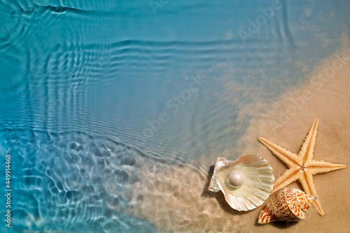 Starfish and seashell on summer beach in sea water. Summer background