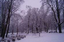 Zima Park W śniegu