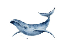 Watercolor Illustration Of A Big Blue Whale. Hand Painted On A White Background.
