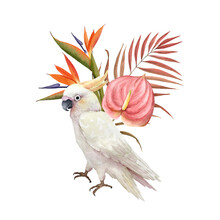 Watercolor Illustration Of A White Cockatoo Bird On The Background Of A Tropical Bouquet Of Flowers, Hand Painted