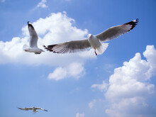 Low Angle View Of One Leg Seagulls Flying