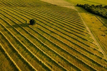 Fields Of Freshly Cut Grass Prepared For Hay Production. Aerial View Of A Cultivated Farmland.
