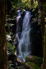 Merriman Waterfall In Quinault Rainforest Between Trees
