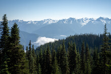 Snow Capped Mountains And Evergreen Forest With Low Clouds In Olympic National Park