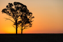 Horizontal Shot Of A Silhouette Of Two Trees With A Sunset In The Background