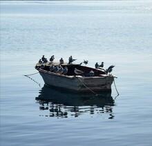 Seagull Meeting