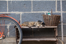 Cat Lying On An Old Wooden Cabinet; Standing Against The Wall Of The House. Next To The Cat A Wicker Basket And A Bicycle Fragment. Rural Backyard.