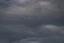 Silhouette Of Bird Flying In Sky With Dark Stormy Clouds. Seagull Hovering In Clouds As Symbol Of Freedom, Lightness And Speed. Sky Texture
