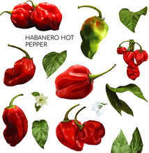 Watercolor Illustration Habanero Hot Pepper Collection Set