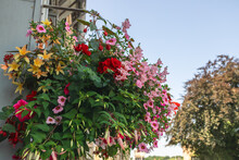 Mixed Red, Purple, Orange And Pink Flowers Eye-catching Outdoors Hanging Flower Basket.