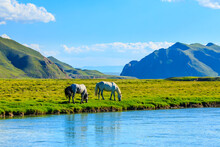 Horses Graze On The Pasture By The River.the Mountain And Meadows With Horses In The Summer Pasture,beautiful Grassland Scenery.