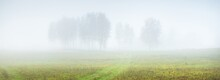 Green Country Agricultural Field And Lonely Tree In A Thick White Morning Fog. Idyllic Rural Scene. Atmospheric Autumn Landscape. Seasons, Nature, Environmental Conservation, Ecology, Climate Change