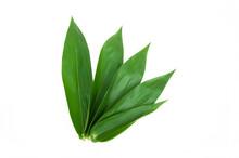 Bamboo Leaves Isolated On White Background, Dendrocalamus