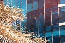 Palm Tree Leaves In The Foreground And A Modern Office Or Residential Building In The Resort Area Of A Tropical City
