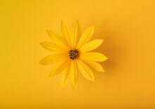 Yellow Flower On A Yellow Background, Monochrome, Minimalism, Flat Lay