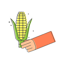Yellow Corn Cob With Leaves In Human Hand On White Background. Organic Vegetable For Eating. Flat Illustration On White Background. Line Art Style. Outline Image. Image For The Design Of Restaurants.