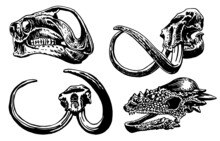 Graphical Set Of Skulls Of Dinosaurs And Mammoth Isolated On White Background,vector Illustration