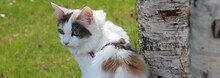 Cat. Original Public Domain Image From Flickr