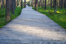 Wooden Pathway In Peat Bog Nature Reserve In Nowy Targ, Poland
