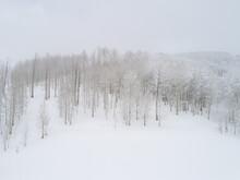Snowy Aspen Hillside