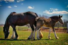 Pony And Mom
