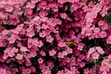 Close Up Photography Of Pink Flowers