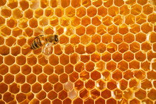 Macro Photo Of A Bee On A Honeycomb. National Honey Bee Day. September Honey Month.